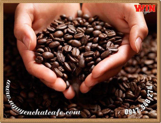 Mua cà phê hạt rang, cà phê nguyên chất ở đâu tại Buôn Ma Thuột, Đăk Lăk ?